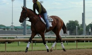 May 29, 2015 Keen Ice, ridden by Faustino Aguilar, jogged two miles at Churchill Downs in preparation for the Belmont Stakes. Trainer Dale Romans, Owner Donegal Racing. By Curlin x Medomak (Awesome Again) ©Mary M. Meek/ESW/CSM