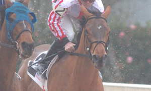 Madefromlucky-2horse-Oaklawn (Rebel Stakes Day) 3-14-2015 (©Justin Manning) JWM_011