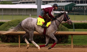 LOUISVILLE, KY - APRIL 20: Lani (Tapit x Heavenly Romance, by Sunday Silence) works 5 furlongs in 1:06 at Churchill Downs, Louisville KY.Owner Ms. Yoko Maeda, trainer Mikio Matsunaga. (Photo by Mary M. Meek/Eclipse Sportswire/Getty Images)