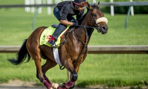 LOUISVILLE, KY - MAY 02: Suddenbreakingnews, trained by Donnie Von Hemel and owned by Samuel F. Henderson, exercises and prepares during morning workouts for the Kentucky Derby and Kentucky Oaks at Churchill Downs on May 2, 2016 in Louisville, Kentucky. (photo by Scott Serio/Eclipse Sportswire/Getty Images)